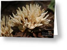 Spindle Mushroom Greeting Card by Susan Leavines