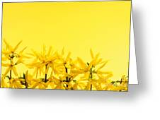 Spring Yellow Forsythia Greeting Card by Elena Elisseeva