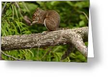 Squirrel Greeting Card by Eric Abernethy