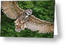 Stunning European Eagle Owl In Flight Greeting Card by Matthew Gibson