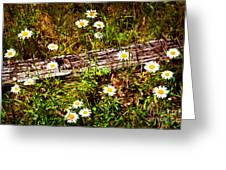 Summer Flowers On The Blue Ridge Parkway 7653 Greeting Card by Dan Carmichael