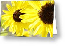 Sunflowers Greeting Card by Les Cunliffe