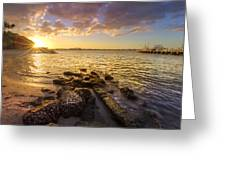 Sunset Light Greeting Card by Debra and Dave Vanderlaan