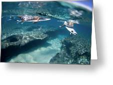 Surfers Over Reef. Greeting Card by Sean Davey