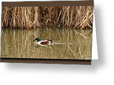 Swimming Among The Reeds Greeting Card by Chris Anderson