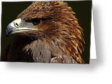 Tawny Eagle Greeting Card by Paulette Thomas