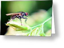 The Fly Greeting Card by Toppart Sweden
