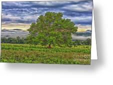 The Tree Greeting Card by Geraldine DeBoer