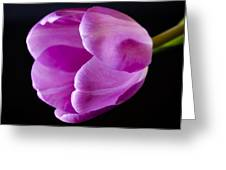 The Very Pink Of Perfection Greeting Card by Christi Kraft