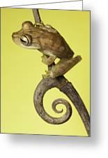 Tree Frog On Twig In Background Copyspace Greeting Card by Dirk Ercken