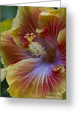 Tropical Hibiscus - Maui Hawaii Greeting Card by Sharon Mau
