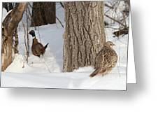 Undercover Greeting Card by Lori Tordsen