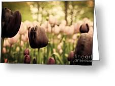 Unique Black Tulip Flowers In Green Grass Greeting Card by Michal Bednarek