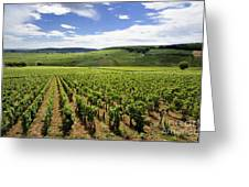 Vineyard Of Cotes De Beaune. Cote D'or. Burgundy. France. Europe Greeting Card by Bernard Jaubert