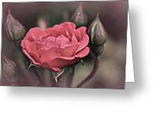 Vintage Rose No. 4 Greeting Card by Richard Cummings