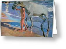 Washing The Horse Greeting Card by Joaquin Sorolla Y Bastida