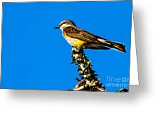 Western Kingbird Greeting Card by Robert Bales