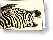 Zebra Head Study Greeting Card by Juan  Bosco