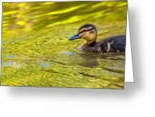 Duke Gardens Greeting Card by Gene Hilton