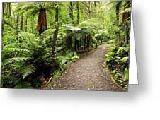 Forest Trail Greeting Card by Les Cunliffe