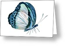 101 Perched Danis Danis Butterfly Greeting Card by Amy Kirkpatrick