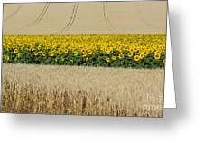 Sunflowers Greeting Card by Bernard Jaubert
