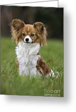 110506p146 Greeting Card by Arterra Picture Library