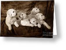 Vintage Festive Puppies Greeting Card by Angel  Tarantella