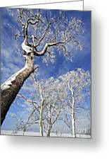 130201p343 Greeting Card by Arterra Picture Library