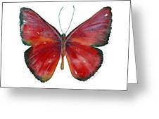 16 Mesene Rubella Butterfly Greeting Card by Amy Kirkpatrick