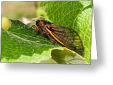 17 Year Cicada 2 Greeting Card by Lara Ellis