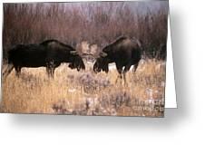 Moose Greeting Card by Art Wolfe