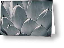 Agave Leaves Greeting Card by Kelley King
