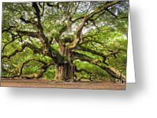 Angel Oak Tree Of Life Greeting Card by Dustin K Ryan