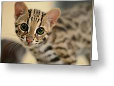 Asian Leopard Cub Greeting Card by Laura Fasulo