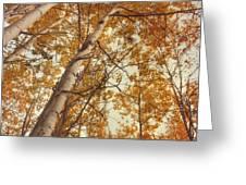 autumn aspens Greeting Card by Priska Wettstein