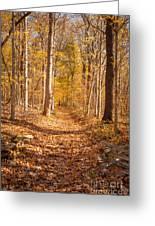 Autumn Trail Greeting Card by Brian Jannsen