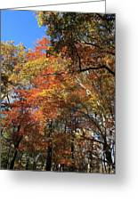 Autumn Trees Greeting Card by Frank Romeo