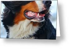 Beautiful dog portrait Greeting Card by Michal Bednarek