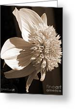 Dahlia Named Platinum Blonde Greeting Card by J McCombie