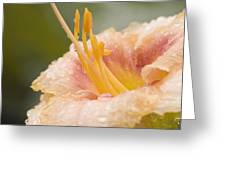 Day Lilly Greeting Card by Robert Culver