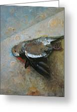 Dove Greeting Card by Cap Pannell