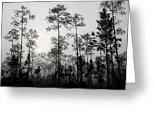 Early Morning Fog Landscape Greeting Card by Rudy Umans