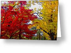 Fall Leaves Greeting Card by Ariane Moshayedi