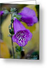 Foxglove Greeting Card by Ivete Basso