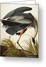 Great Blue Heron Greeting Card by John James Audubon