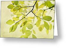 Green Foliage Series Greeting Card by Priska Wettstein