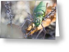 Green Grasshopper Ephippiger Greeting Card by Jivko Nakev