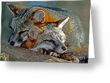 Grey Foxes Greeting Card by Millard H. Sharp