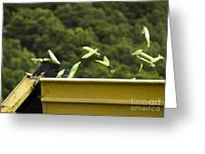 Harvester Reaps Corn Greeting Card by Deyan Georgiev